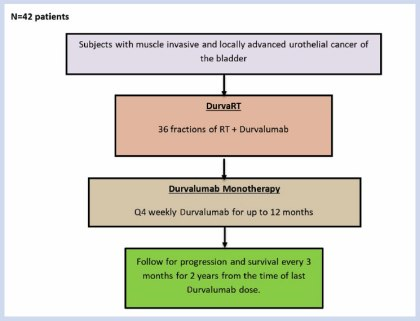 Overall study schema for Concurrent Durvalumab and Radiation Therapy
